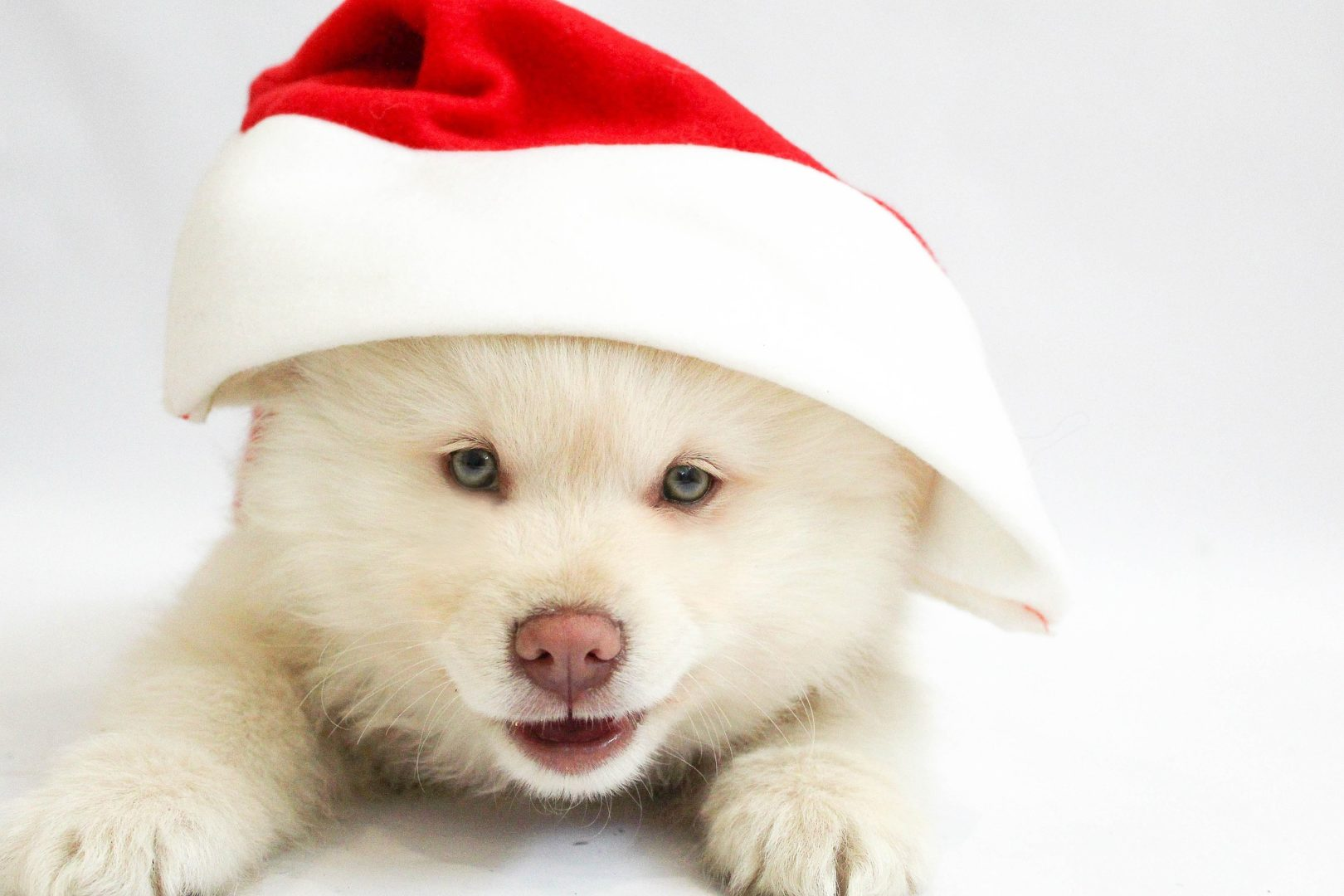 Corporate Holiday Party Ideas NYC: Pet party